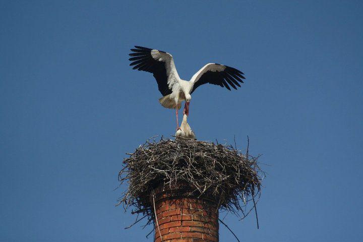 Chimney top stork