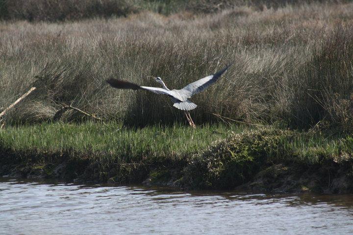 Bird Watching in the Algarve