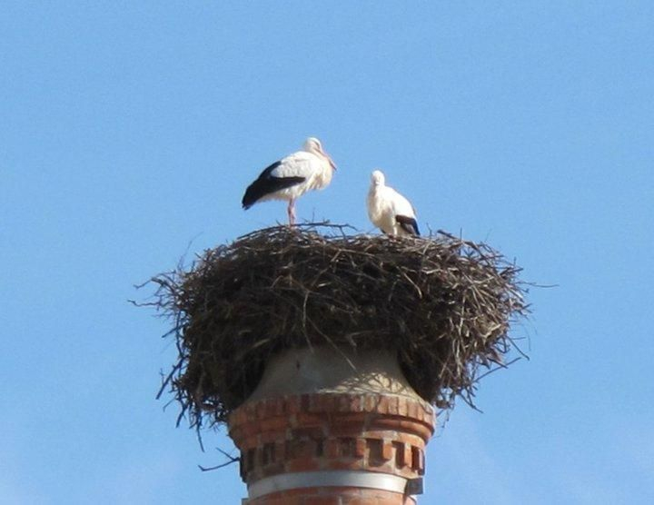 Storks in their nest, Silves