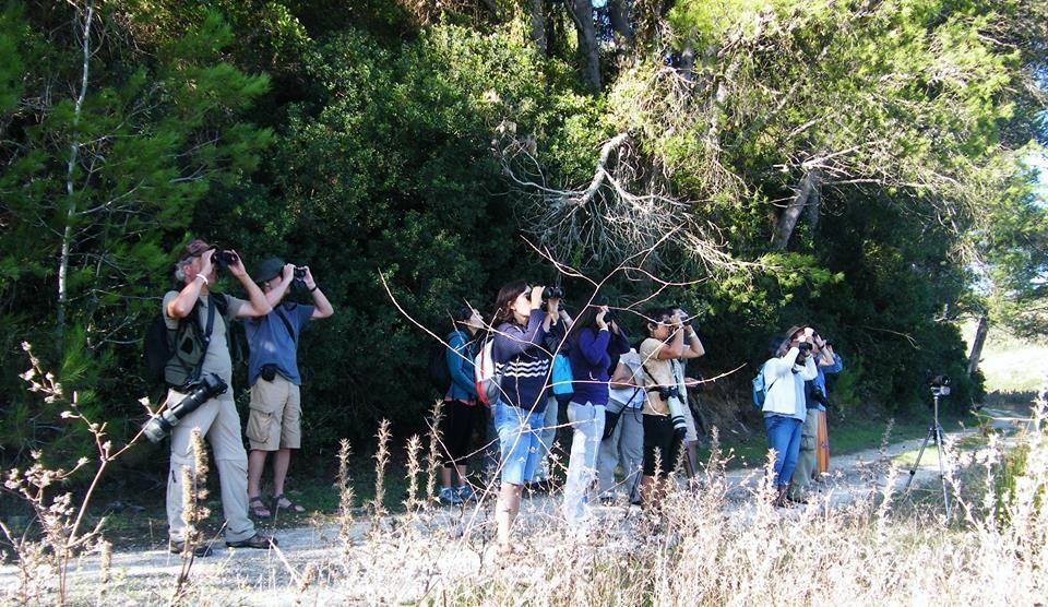 Birdwatching in Sagres