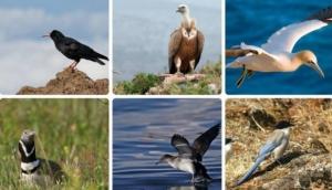 Sagres Birdwatching Festival 2016