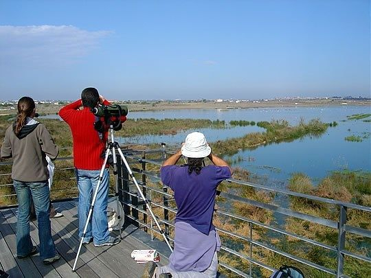 Birdwatching in Algarve, photo credit Lands, Turismo na Natureza