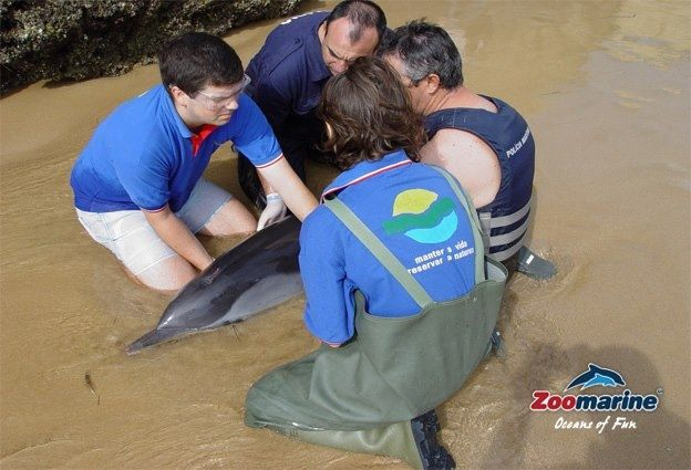 Rescuing a distressed dolphin