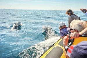 Dream Wave Boat Trips