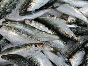 Sardines, Intermarche Supermarket, Algarve