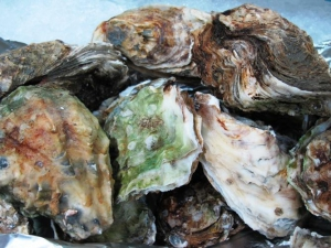 Oysters, Intermarche Supermarket, Algarve