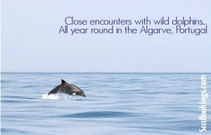 Dolphin Watching, Seabookings.com Algarve