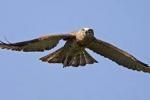 Birdwatching Course