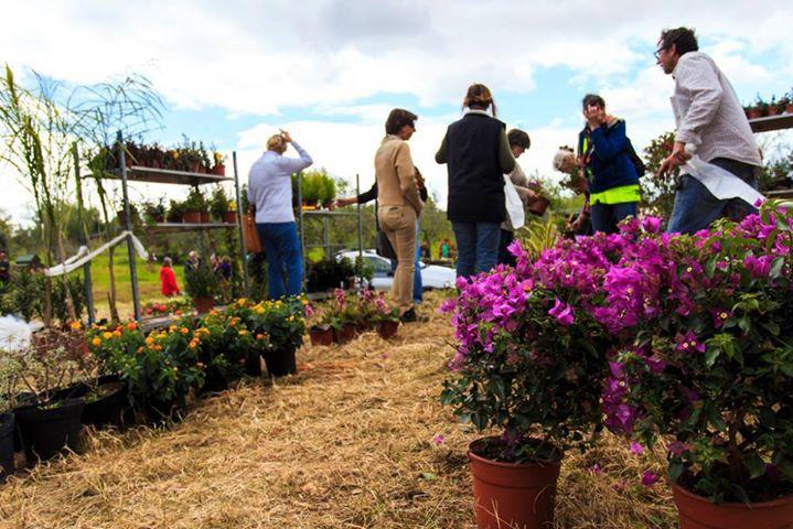 Mediterranean Gardeners Spring Garden Fair 2017