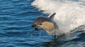 Winter Dolphin Watching
