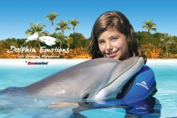 Dolphin Emotions at Zoomarine, Algarve