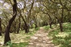 Via Algarviana Nature Trail