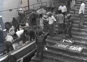Portimão, Algarve - unloading fish