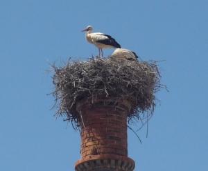 Portimão - nesting stork