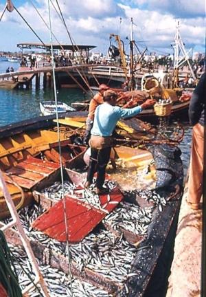 Portimão - unloading fish