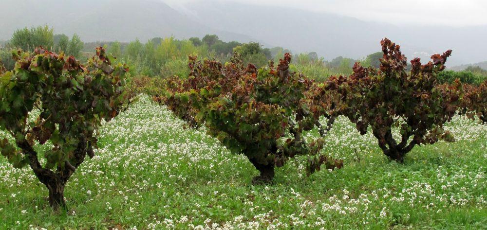 Bodegas Xalo in Jalon has award-winning wines and cava