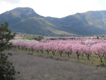 Blossom on trees in the Jalon valley