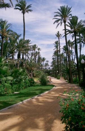 Palm Tree Park in Elche