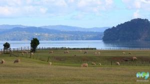 Ambury Farm Park