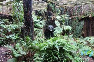 Fernglen Gardens - Fern House