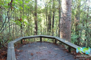 Kauri Park