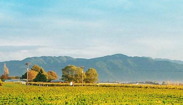 NZWINEPRO
