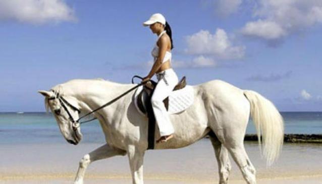 Okura River Beach Horseriding