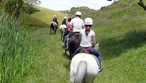 Tasman Horse Treks
