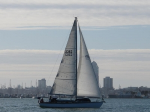 Auckland Sailing