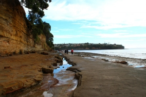 Mairangi Bay Walkway