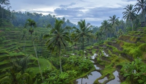 7 Choices of Full Day Bali Tours?