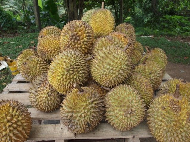 Lovely smelly durians