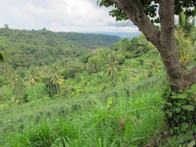 Verdant hills around Munduk