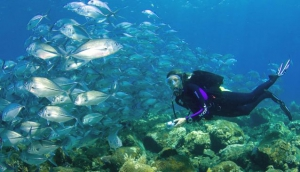Diving in Bali Waters