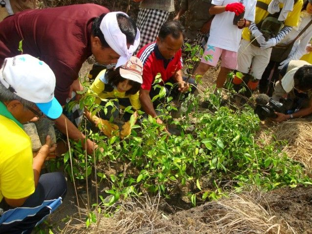 Selecting trees at a previous Bali Hijau Lestari planting