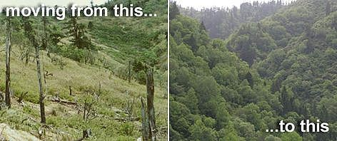 What reforestation does