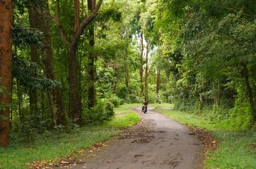 The way to go - forest in Bali - photo jakpost