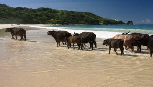Sumba - a New Experience