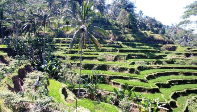 1. Trek through the Balinese Rice Terraces