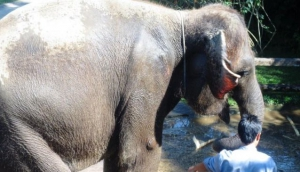 3.Ride a Sumatran Elephant
