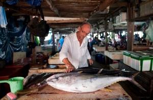 Sardine's fresh fish