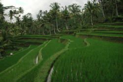 Central Bali - The Mountains