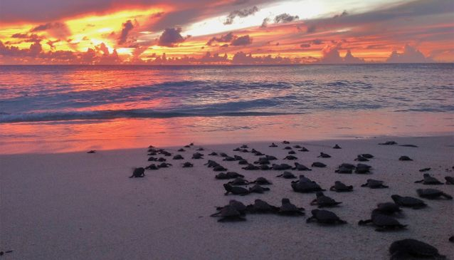 Turning the tide for Sea Turtles