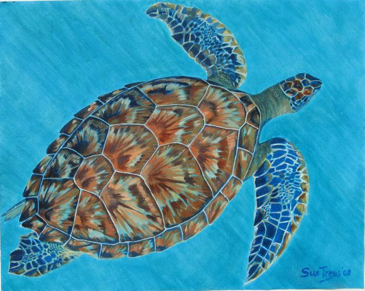 Sue Trew's Hawksbill Turtle
