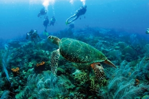 Barbados offers a unique scuba diving experience