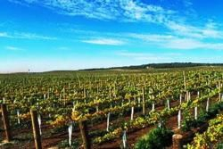 El Penedès, region of Wine and Cava