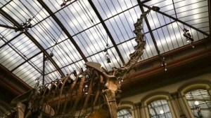 Brachiosaurus - The largest mounted skeleton in the world