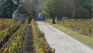 The Secret Garden of Bordeaux
