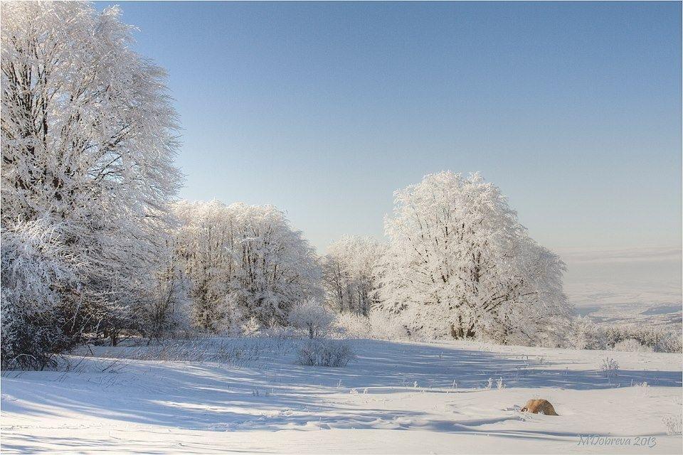 Snowy in Vitosha