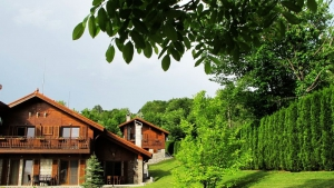 Wood coat contrasts beautifully the green lush around